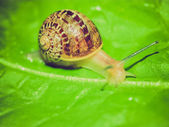 Retro look Snail slug — Stock Photo