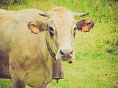 Krowa w stylu retro — Zdjęcie stockowe
