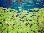 Retro look Waterlily — Stock Photo