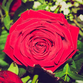 Retro look Rose picture — Stock Photo