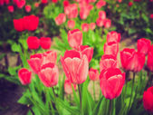 Retro look Tulips picture — Stock Photo
