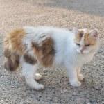 Cat pet animal — Stock Photo