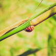 Retro look Lady Beetle — Stock Photo