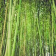 Stock Photo: Retro look Bamboo picture