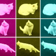 Pop Art cat — Stock Photo