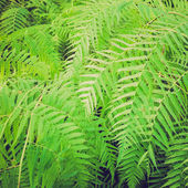 Retro look Ferns picture — Stock Photo