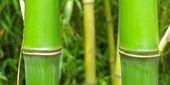 Leaf - panorama — Stock Photo