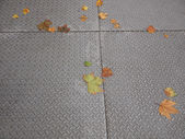 Leaves on pavement — Foto Stock