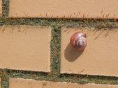 Slug snail — Stock Photo