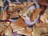 Porcini svamp — Stockfoto