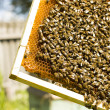 Work bees in hive Bees convert nectar into honey — ストック写真