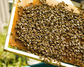 近距离工作蜜蜂蜂蜜的单元格上的视图 — 图库照片