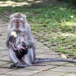 Mother and baby monkey eating - Stok fotoğraf