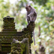 Stock Photo: Monkey in ubud forest, Bali