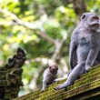 Stock Photo: Two monkeys in Bali Ubud forest