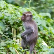 Stock Photo: Monkey in nature, Ubud forest, Bali