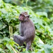 Stock Photo: Monkey in natural background, Ubud forest, Bali
