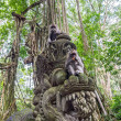 Stock Photo: Two eating monkeys in Bali Ubud forest