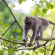 Monkey on tree branch in Ubud forest, Bali - Stok fotoraf