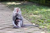 Mère et bébé singe mangeant — Photo