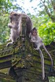 Mangiare la scimmia con un bambino — Foto Stock
