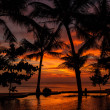 Stockfoto: Dramatic Sunset with silhuettes palm and reflection in swimming