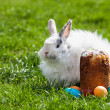 Easter bunny behind Easter cake and painted eggs — Stock Photo