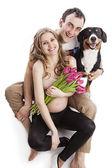 Młody ciąży kilka i entlebucher sennenhund psa nad białym — Zdjęcie stockowe
