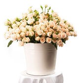 Bunch of creamy roses in a bucket over white — Stock Photo