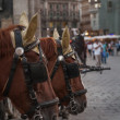 Stock Photo: Horses in Vienna