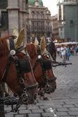 Hästar i wien — Stockfoto