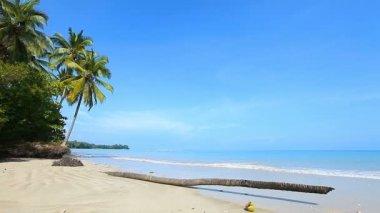 Tropisk strand — Stockvideo