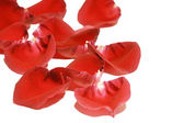 Rose petals, isolated on white background — Stock Photo