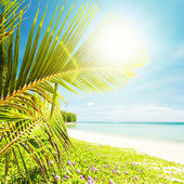 Tropical beach in sunny day. Square composition. — Stock Photo