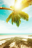 Tropical beach in sunny day — Stock Photo