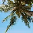 Stock Photo: Tropical beach. Vertical panoramic composition.