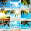 Tropical beach collection — Stock Photo #22455903