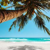 Under the palm tree — Stock Photo
