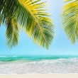 Stock Photo: Tropical beach in sunny day