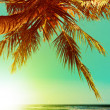 Stock Photo: Tropical beach at sunset time. Vertical panoramic composition.