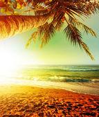 熱帯のビーチに沈む夕日。縦の収穫. — ストック写真