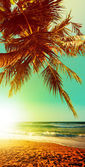 在日落时的热带海滩。垂直全景组成. — 图库照片