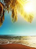 Peaceful tropical beach at dusk — Stock Photo