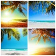 Tropical nature collection — Stock Photo #25036745