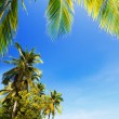Idyllic tropical beach. Vertical shot. — Stock Photo