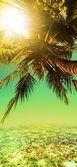 Tropical sunset. Vertical panorama. — Stock Photo