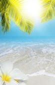 Tropical resort concept — Stock Photo