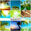 Tropical nature collection — Stock Photo