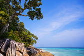 HDR shot of exotic tropical beach — Stok fotoğraf