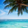 Palm tree at the tropical beach — Stock Photo